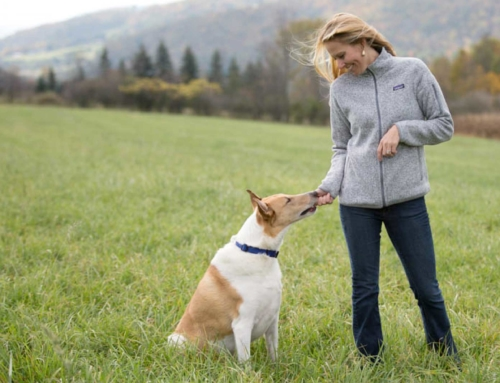 Elanco Announces Agreement to Acquire Bayer's Animal Health Business